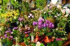 Shop Hirai of flower