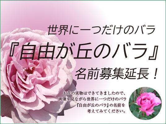 『自由が丘のバラ』名前募集 延長!